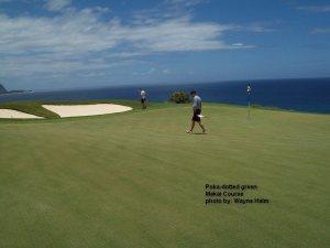 Makai Course - Poka-dotted greens