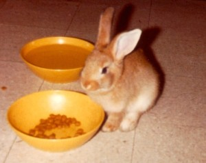 1980-05-xx--#08--Fairmont the Rabbit