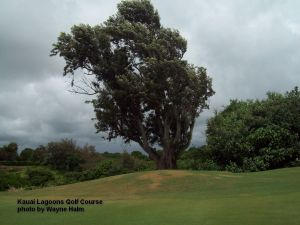 Tree and Clouds on the Kauai Lagoons Golf Club