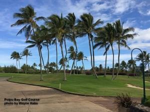 Palm trees on the Poipu Bay Golf Course on Kauai.